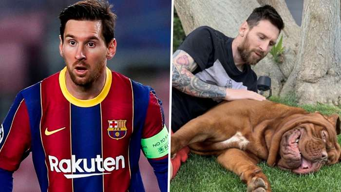 Lionel Messi Barcelona Hulk dog