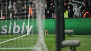 Besiktas Bayern Munich cat