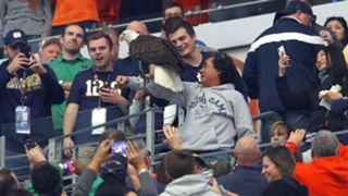 Bald eagle lands on Notre Dame fan before College Football Playoff semifinals