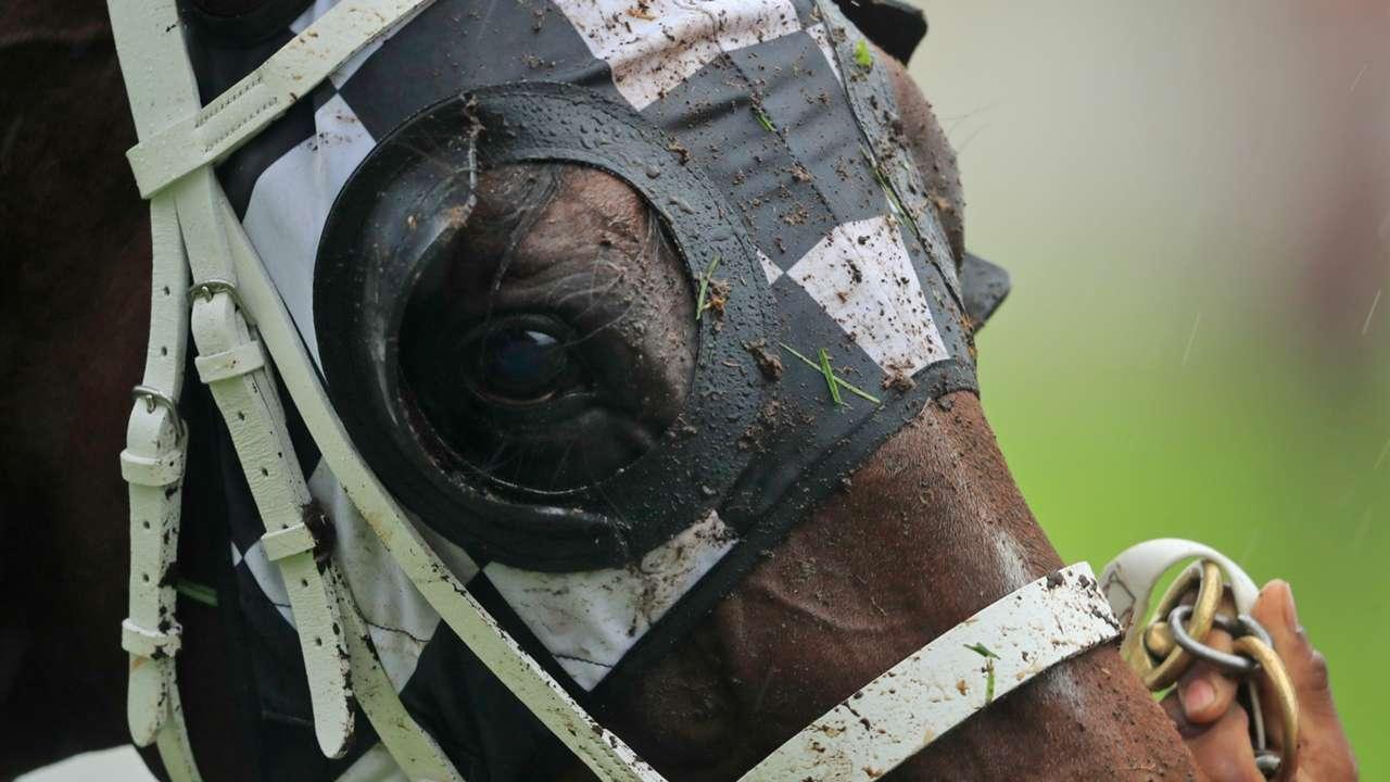 Horse rain wet