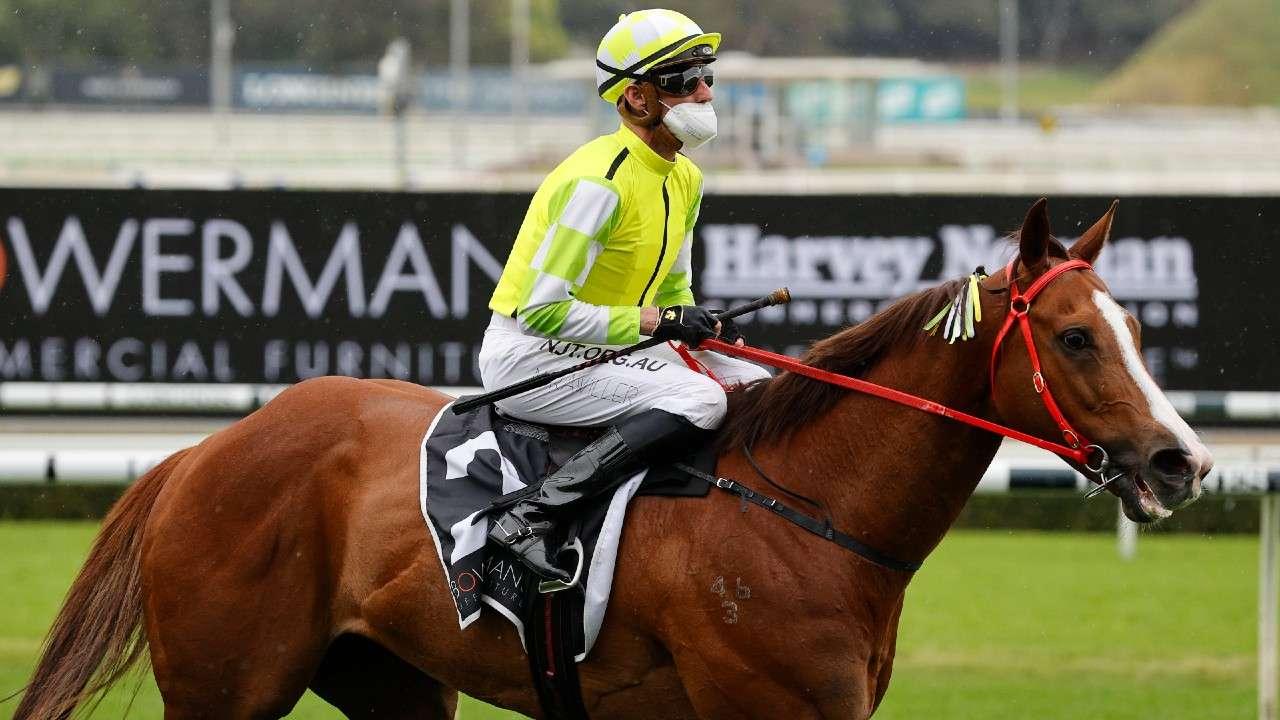 Eduardo horse