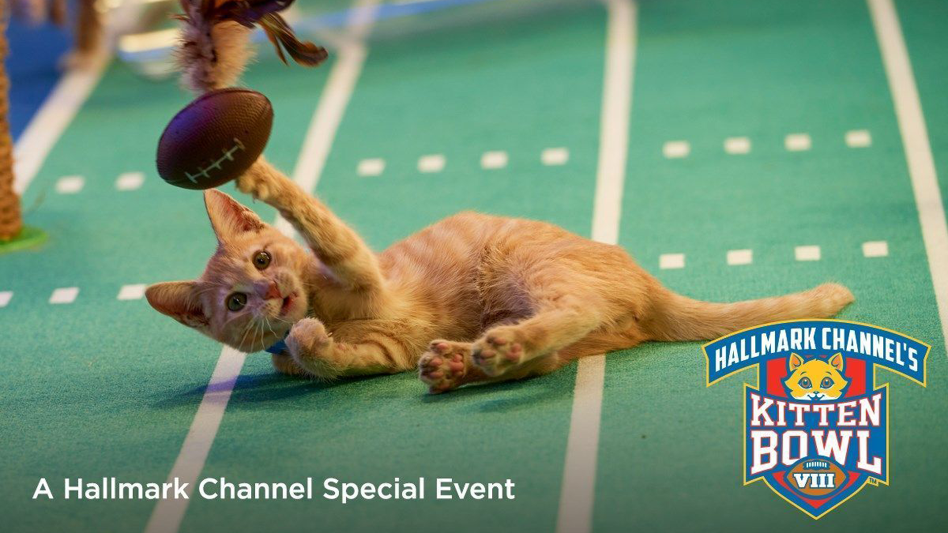Kitten Bowl 2021 date, time, TV channel & how to live stream cats playing football