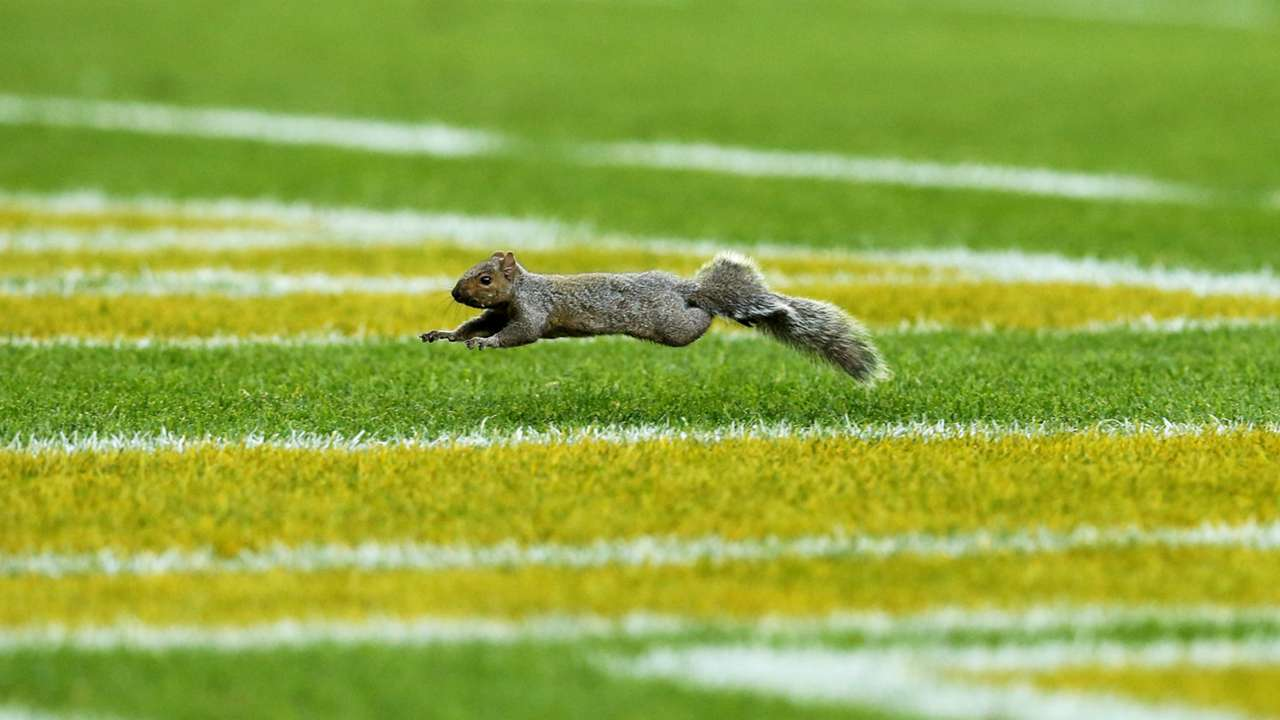 football-squirrel-FTR