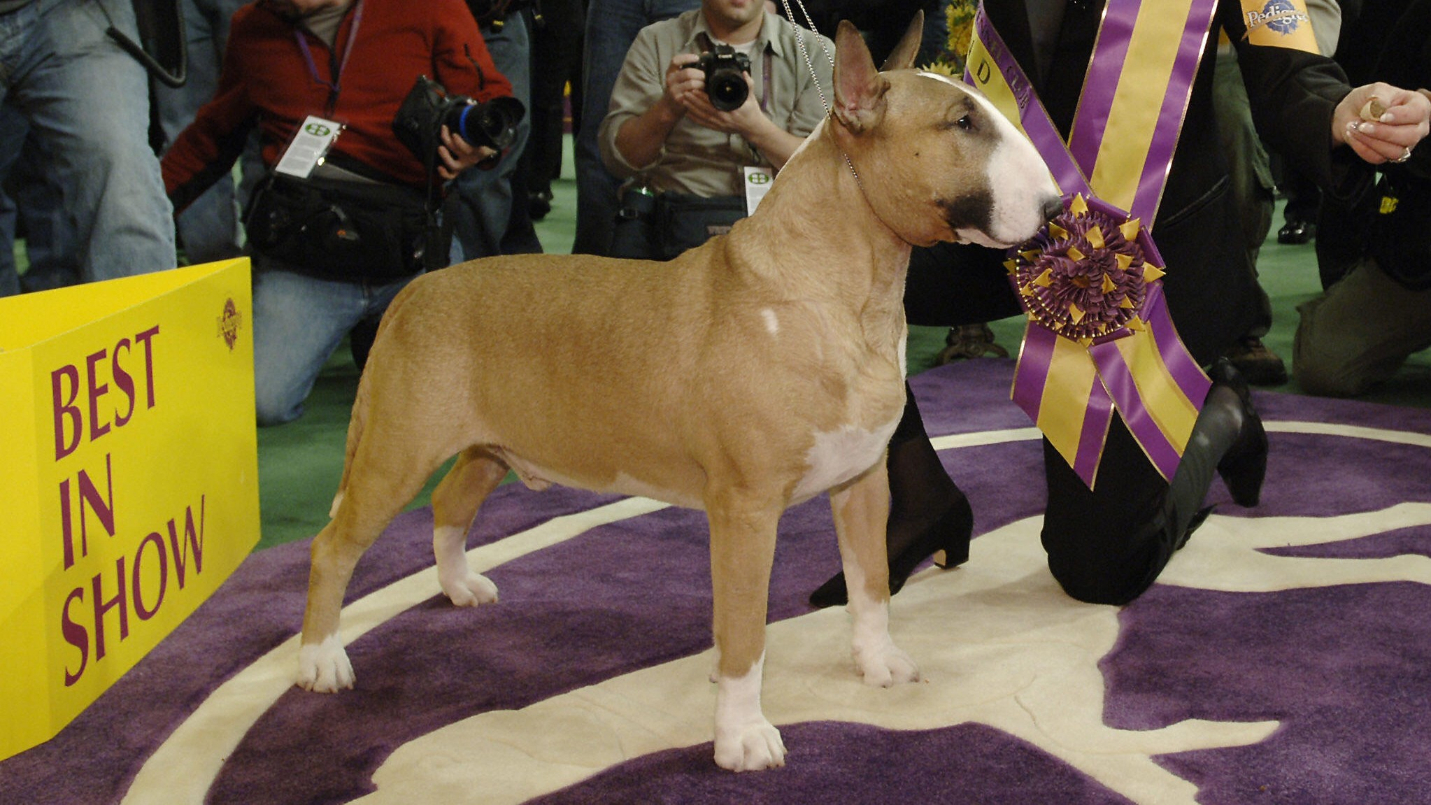 Westminster Dog Show schedule 2021: Dates, times, TV channels, live stream & list of past winners