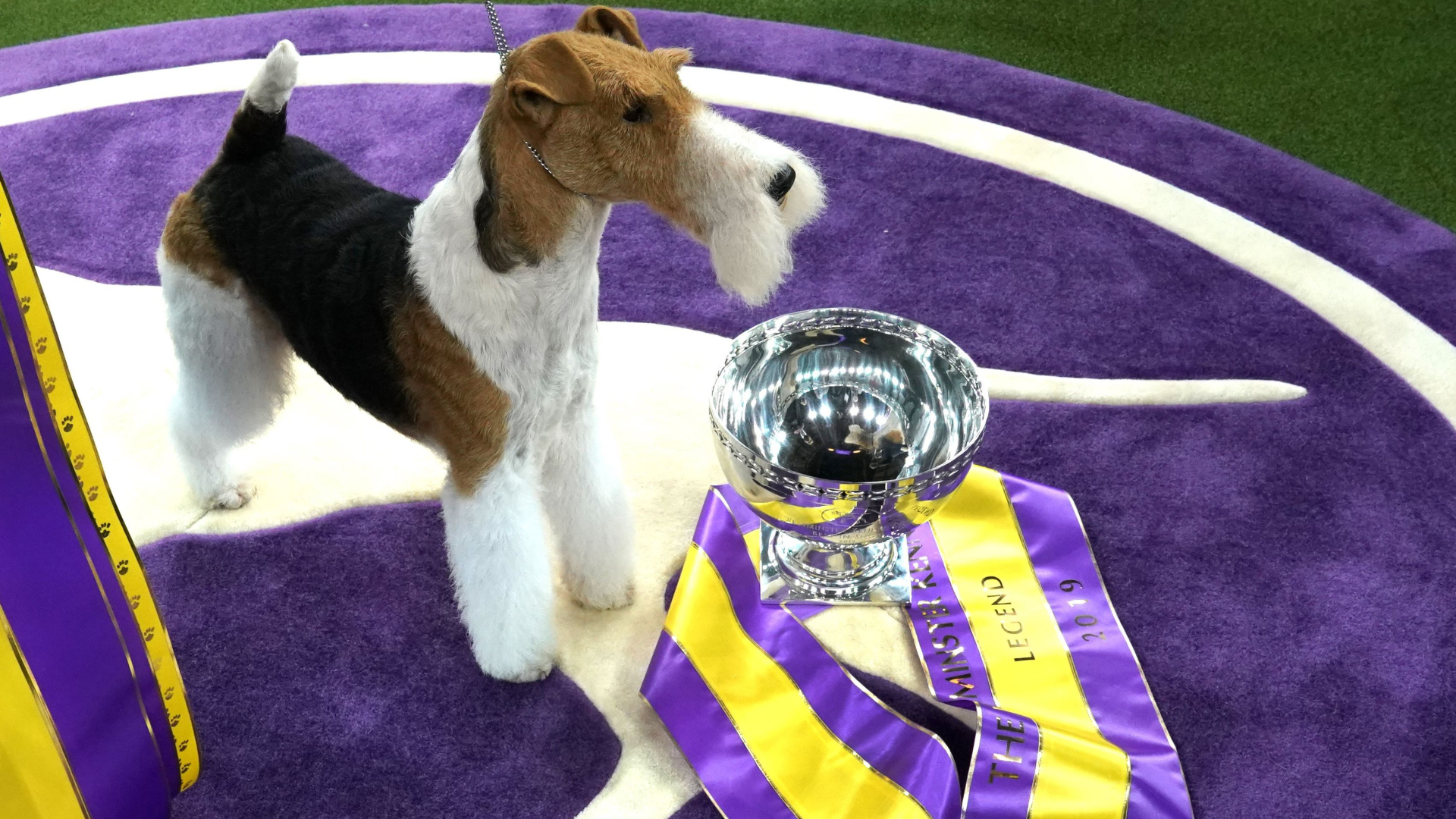 Westminster Dog Show schedule 2020: Dates, TV channels, live stream list of past winners