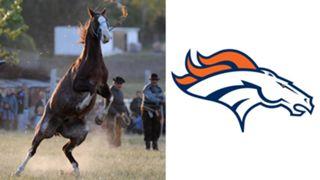 ANIMALS-Broncos-061516-GETTY-FTR.jpg