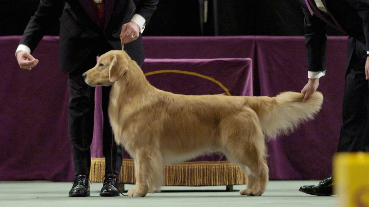 Westminster-Dog-Show-Andy-060821-GETTY-FTR