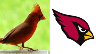 ANIMALS-Cardinals-061516-GETTY-FTR.jpg