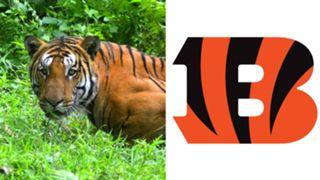 ANIMALS-Bengals-061516-GETTY-FTR.jpg