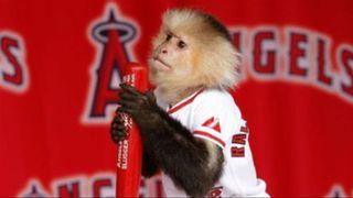 Rally-Monkey-Angels-FTR.jpg