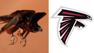 ANIMALS-Falcons-061516-GETTY-FTR.jpg