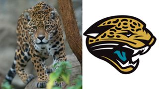 ANIMALS-Jaguars-061516-GETTY-FTR.jpg