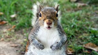 Squirrel-032415-FTR-Getty.jpg