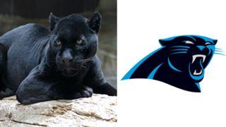 ANIMALS-Panthers-061516-WIKI-FTR.jpg