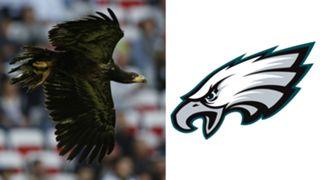 ANIMALS-Eagles-061516-GETTY-FTR.jpg