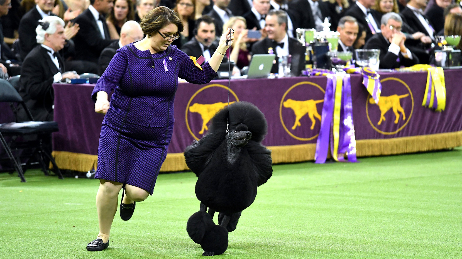 Westminster Dog Show Prize Money: How Much Do Winners Make In 2021?