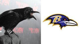 ANIMALS-Ravens-061516-GETTY-FTR.jpg