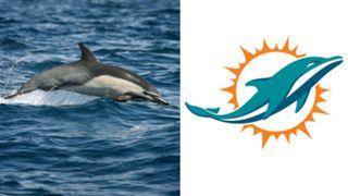 ANIMALS-Dolphins-061516-GETTY-FTR.jpg