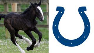 ANIMALS-Colts-061516-GETTY-FTR.jpg